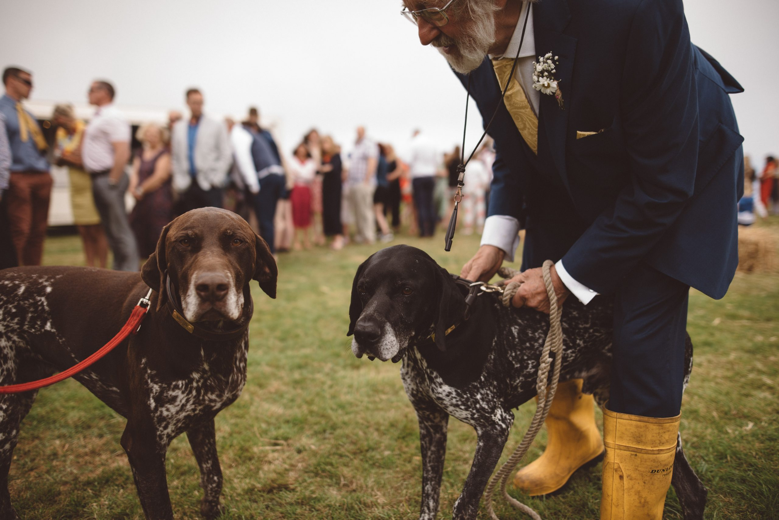 candid photo of dogs at Carswell weddings