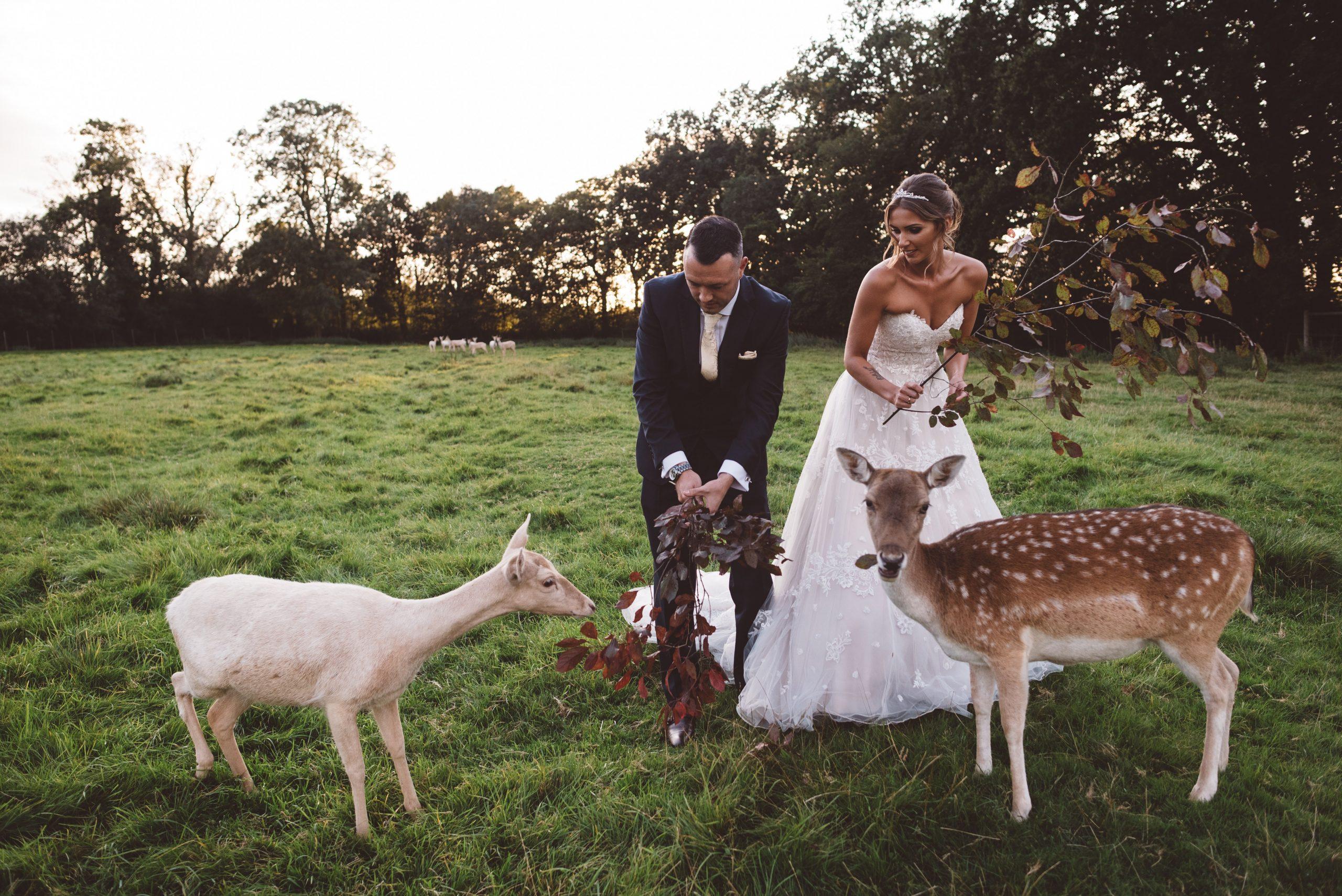 Keythorpe Manor wedding photo with deers