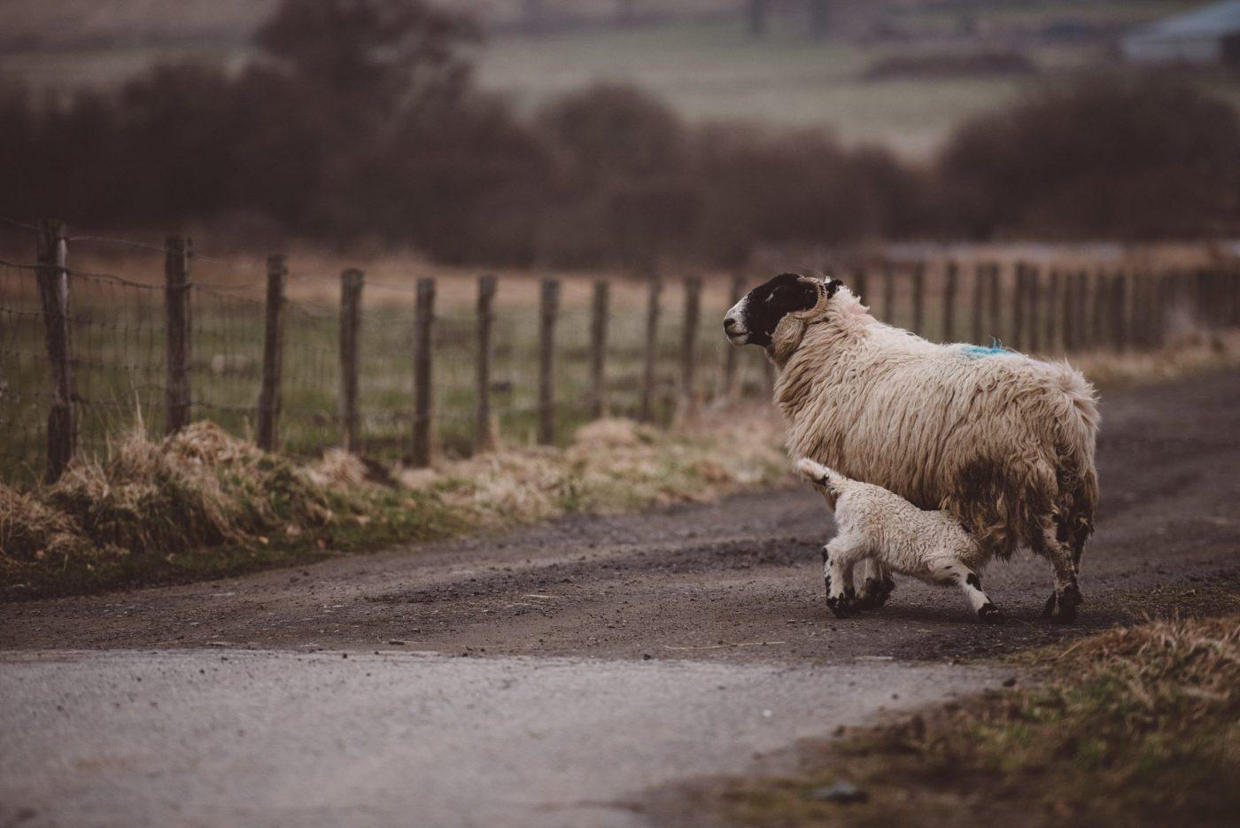 highlands photography