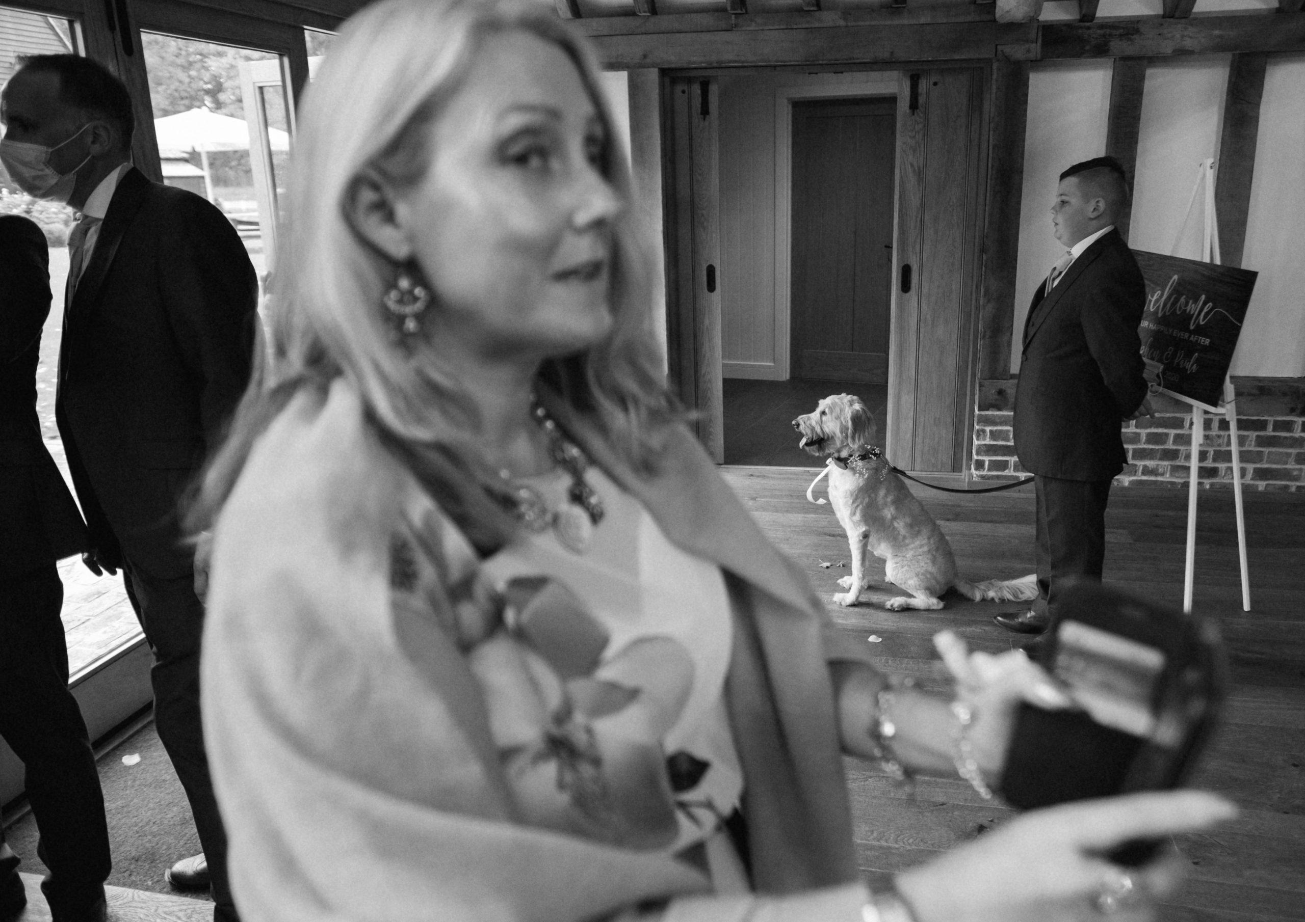documentary wedding photo of dog at Essex wedding